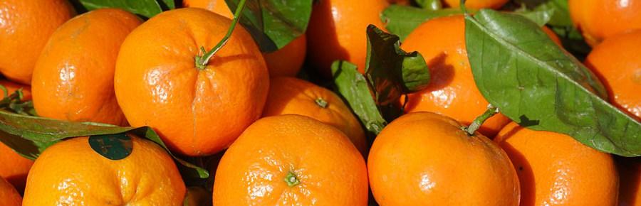 Clementine.